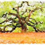 alt=oak tree quercus